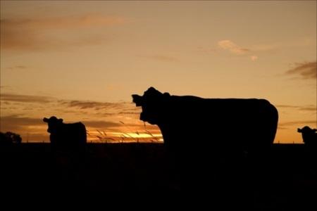 酪農の素晴らしさ ~酪農を通して命や自然の大切さを感じよう~